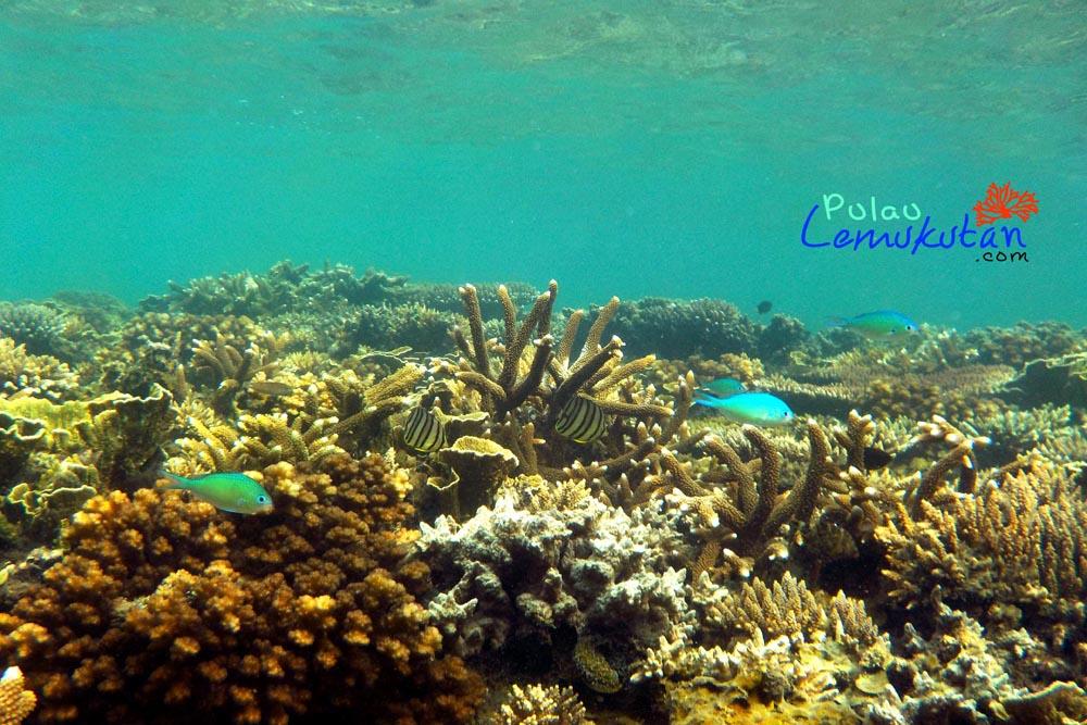 terumbu karang2 crop 1000